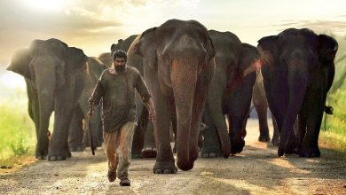 Photo of Kaadan is an incredible film and equally incredible role: Rana Daggubati